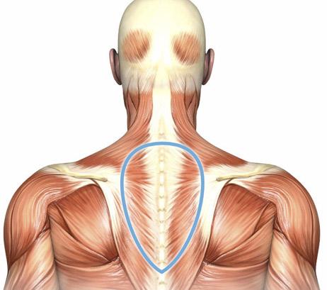 muskler-ovre-ryggen